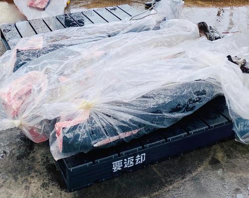 漁業における樹脂パレット(セイキ工業のオーダーパレット)